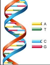 ما مدى توازن الحمض النووي التنظيمي الخاص بمنظمتك ؟ How Balanced Is Your Organizational DNA?
